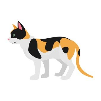 Cat - San Mao cat