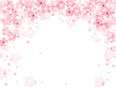 Sakura 149