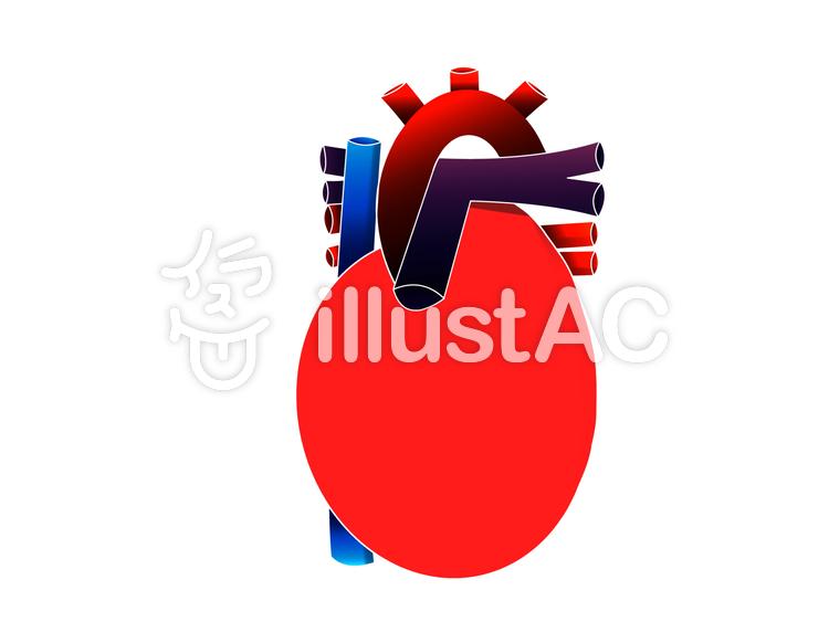 Freie Cliparts: Medizinisch Medizin Der menschliche Körper Interne ...