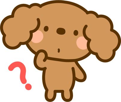Toy poodle feels doubtful