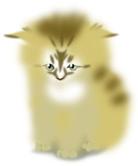 Aberdeen cat