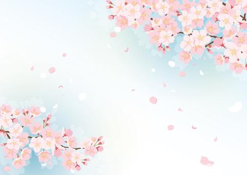 벚꽃 배경 4