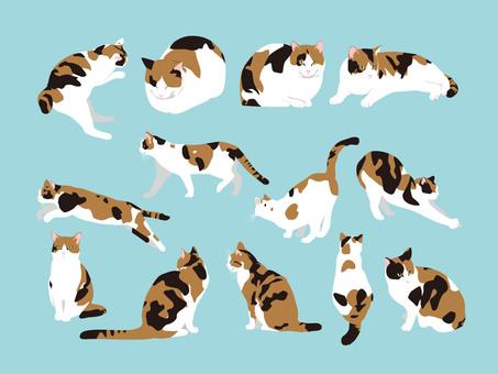 Miwa cat set