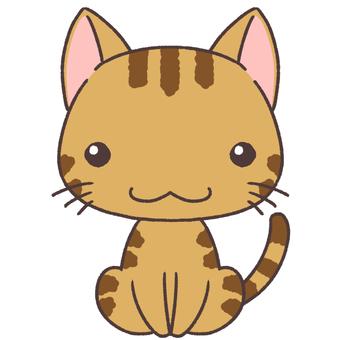차 호랑이 고양이