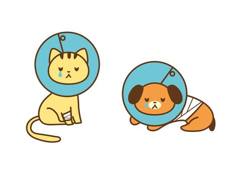 Elizabeth-coloured dog and cat