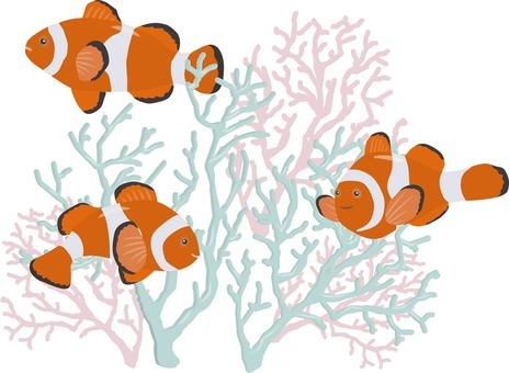 Clownfish and moth