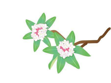 Shen Dinghua