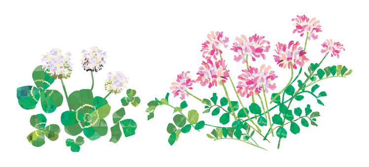 Astragalus and clover
