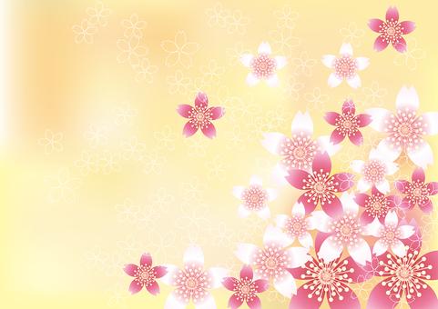 벚꽃의 꽃 82