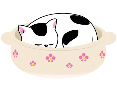 Pot cat