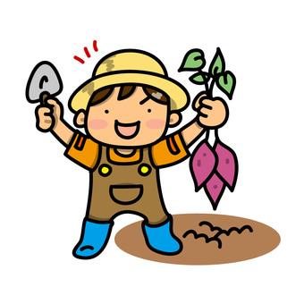 Boys digging up sweet potatoes