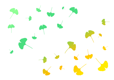From ginkgo fresh green to autumn leaves