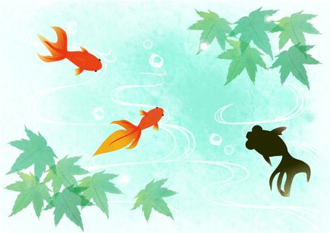 Maple and goldfish