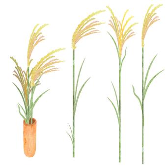 Suzuki plant watercolor
