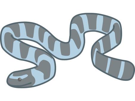 Elav sea snake