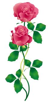 Rose flowers 3