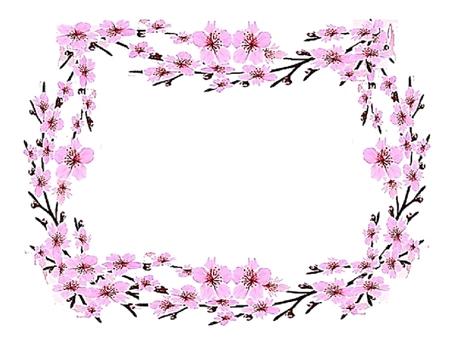 Cherry blossoms frame.