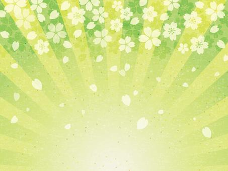 Celebration Sakura Japanese paper radiation background 05