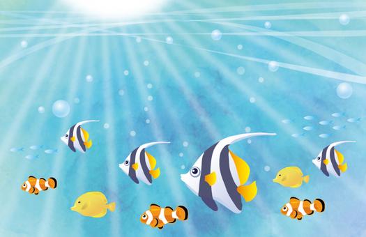 海中の熱帯魚たち