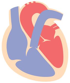 Cardiac section