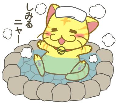 Hot spring cat 2