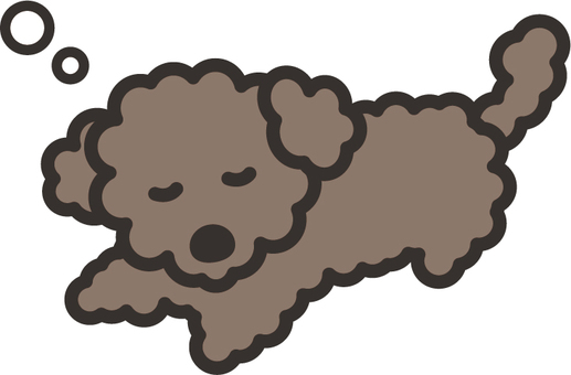 Toy poodle 06