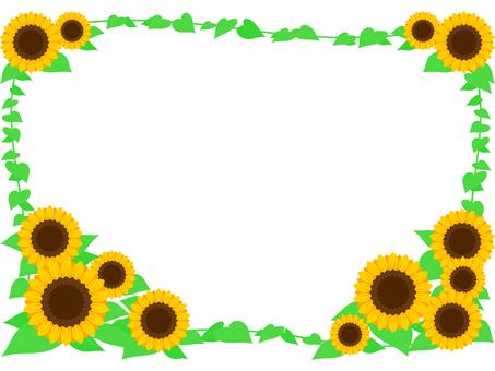 Sunflower _ Sunflower
