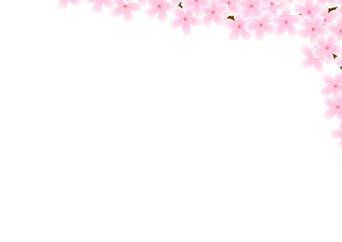 Cherry Blossom Frame / WallPaper