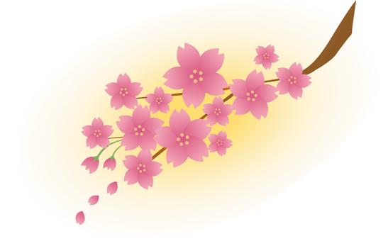 櫻花-024