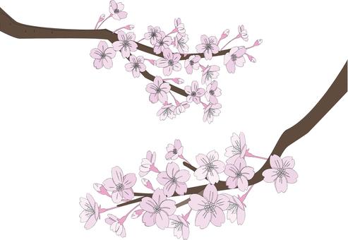 Simple cherry tree 2