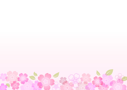 Cherry blossoms 246