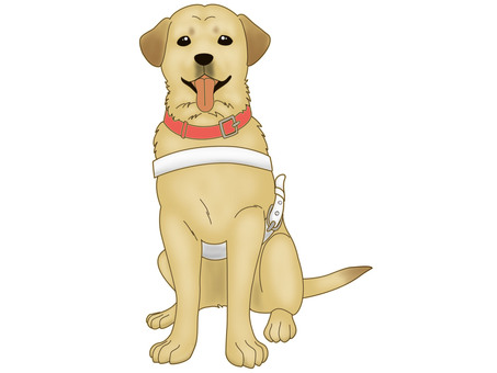 Blind guide dogs 2