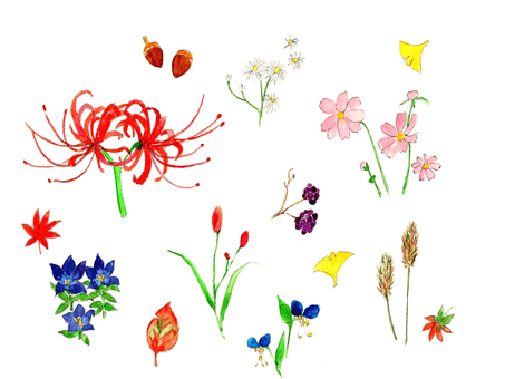 Autumn field flowers