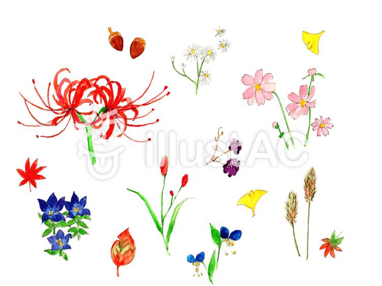 秋の野の花イラスト No 925077無料イラストならイラストac