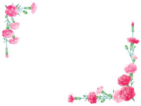 Carnation 17