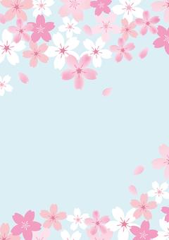 Sakura 41