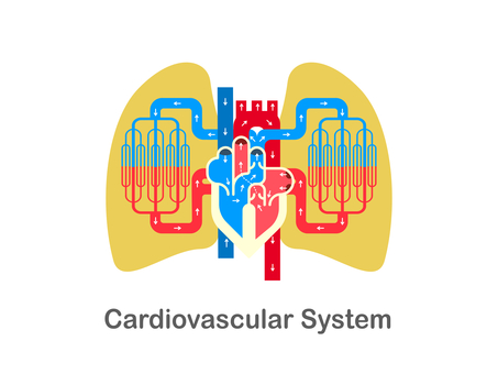 Diagram of the circulatory system around the heart