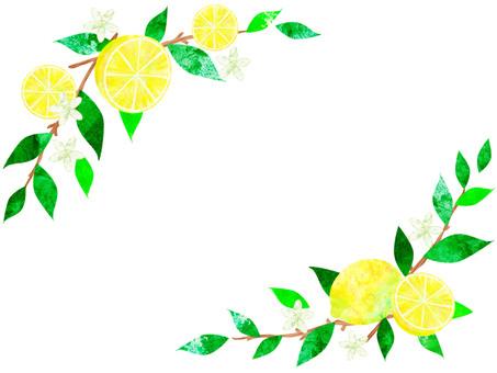 레몬 _ 프레임 03
