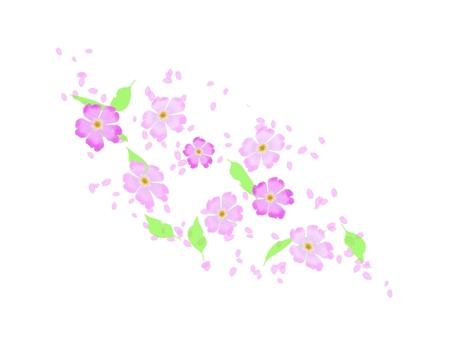Sakura and primrose