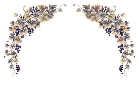 Grape illustration frame 05-1 (white line)