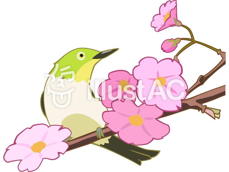 メジロと桜のイラスト