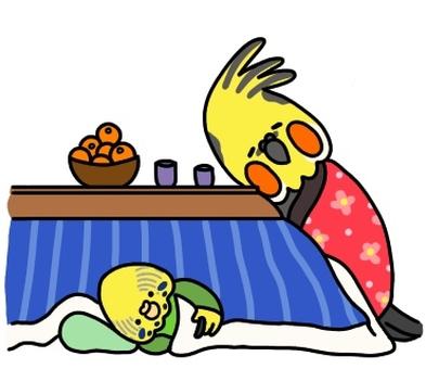 Kotatsu parakeet
