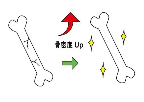 Increase bone density