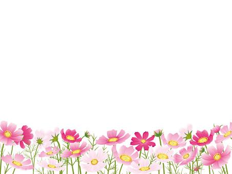 가을의 꽃 코스모스 자르기 04