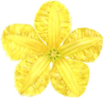Asaza's flower