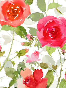 붉은 장미 수채화