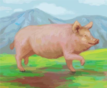 Good evening pig