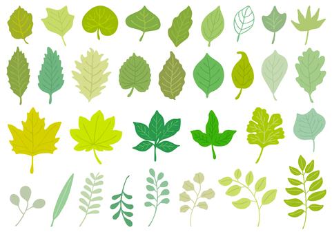 Leaf set 1