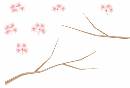 Cherry blossoms and branch parts
