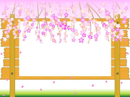나무의 메시지 보드 벚꽃 만개